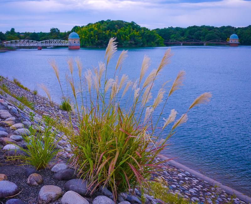 初秋の多摩湖の写真